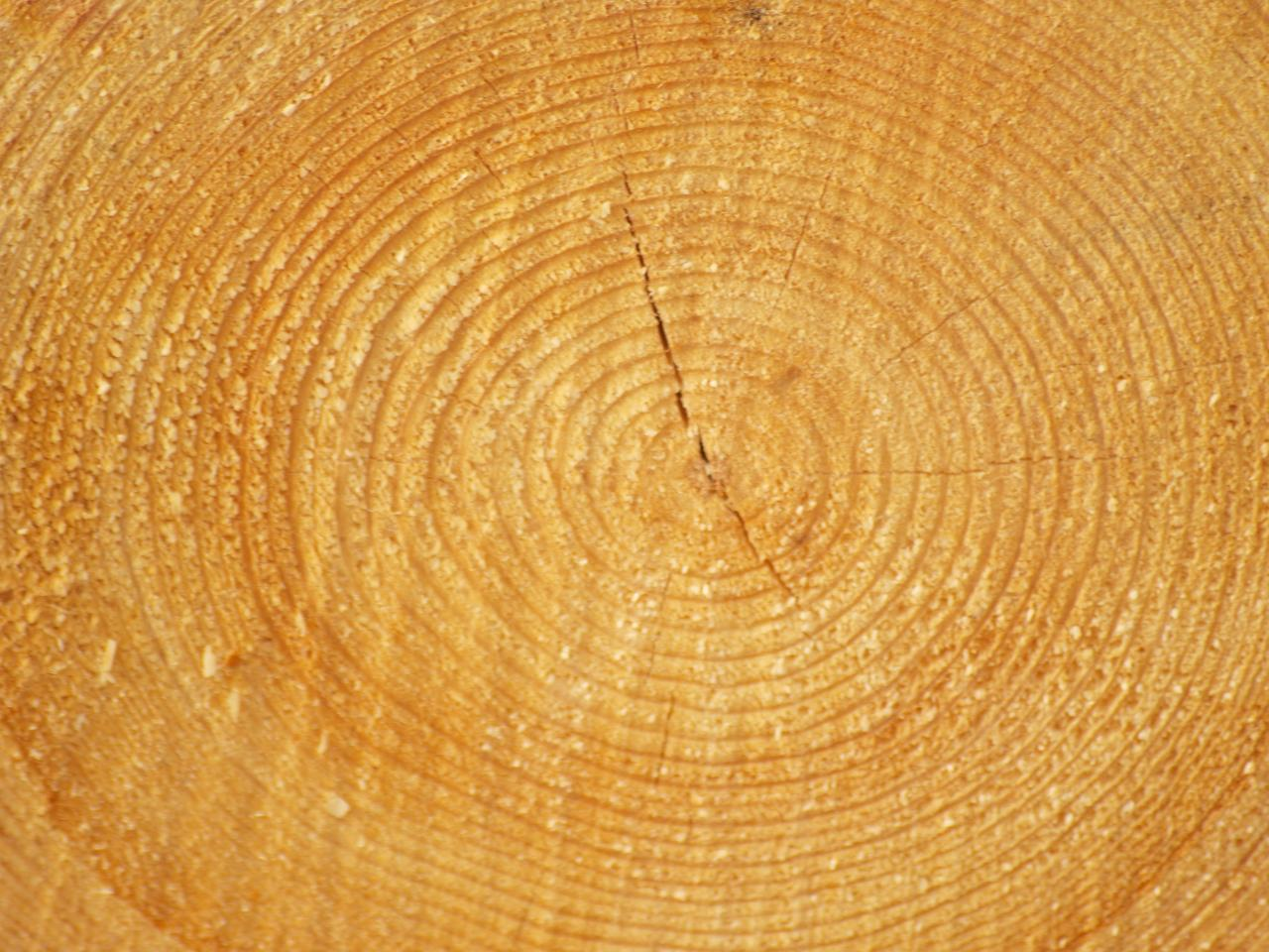 Wood background, tree, wood, texture, plant, HQ Photo