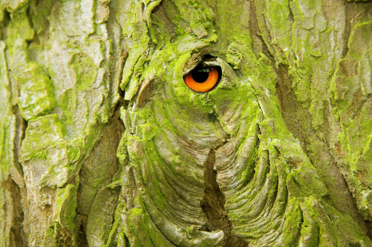 Wood Bark, texture, tree, wild, wooden, HQ Photo