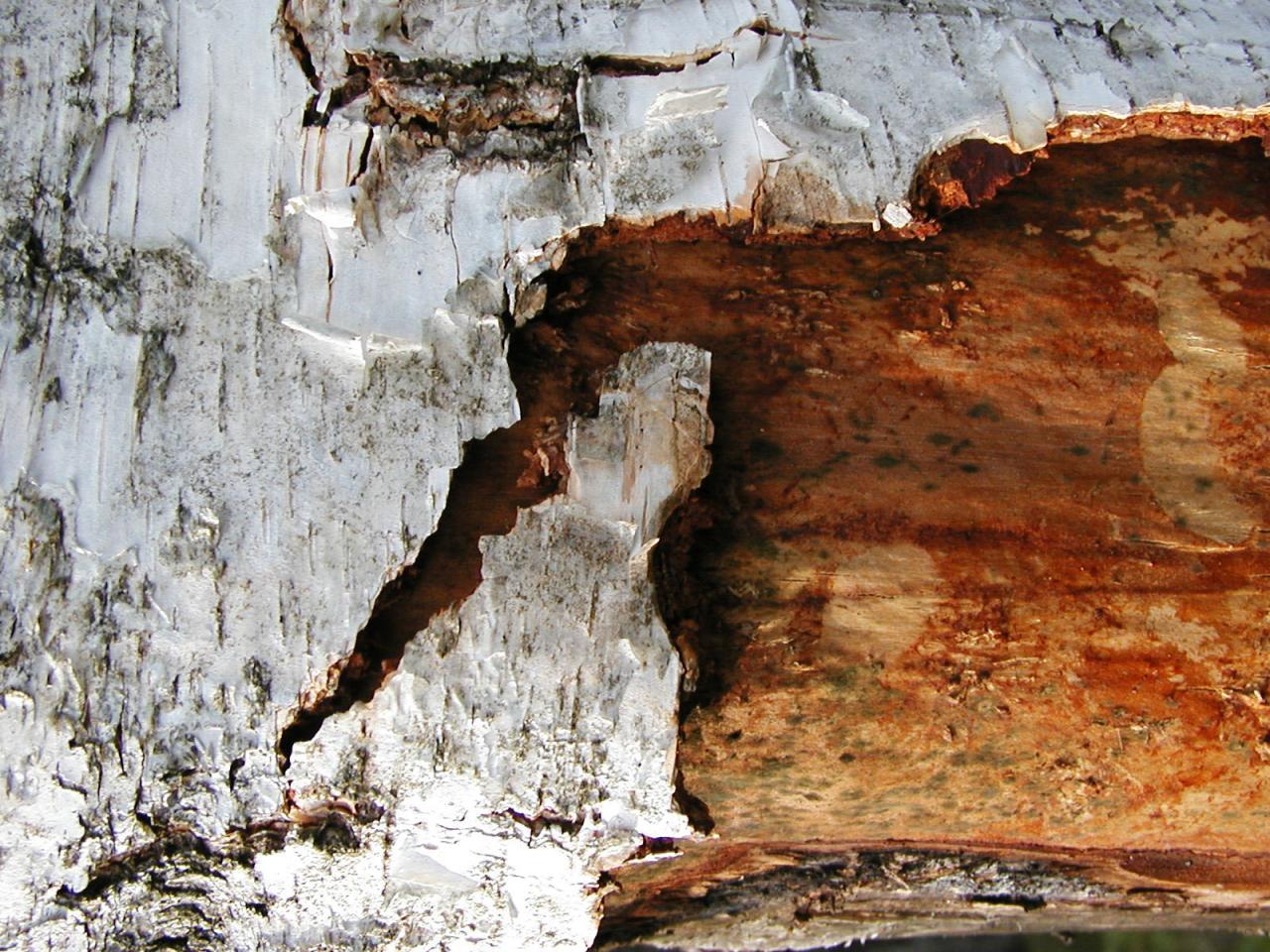 Wood bark, timber, tree, wood, texture, HQ Photo