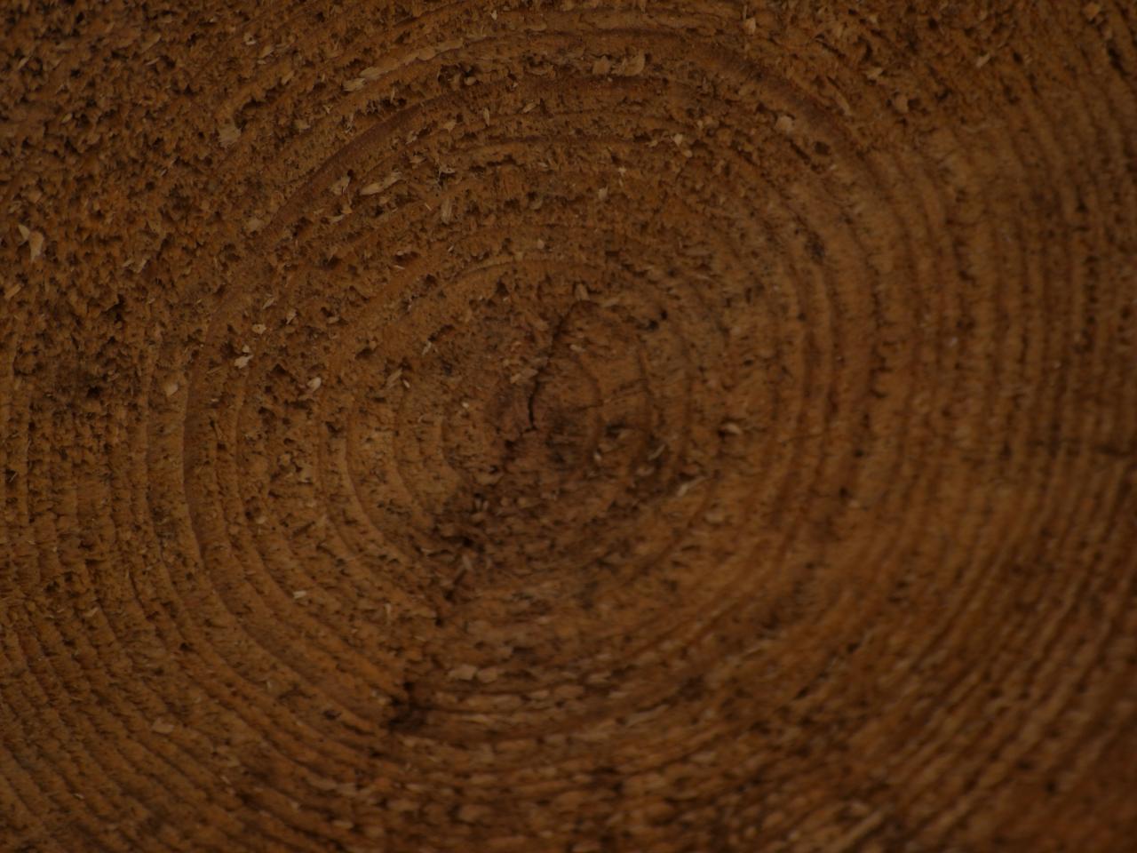Wood Texture, texture, tree, wood, plant, HQ Photo