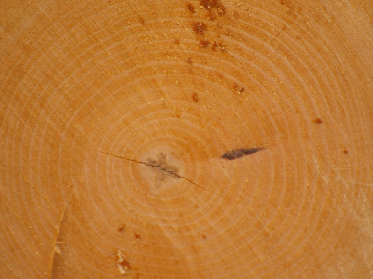 Wood Texture, tree, wood, texture, plant, HQ Photo