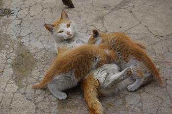 떠돌이 어미 고양이