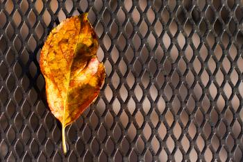 2016/366/299 Drops on Dropped Leaf