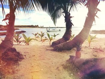 3 Coconut Trees Near the Beach Shore Line during Day Time
