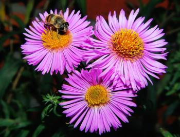 3 Pink Clustered Flowers in Close Up Shots