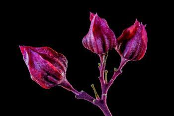 3 Pink Flower Bud