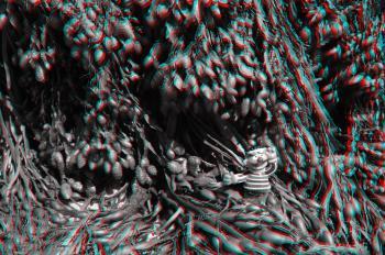 3D CMS CC-BY