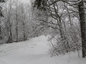 A beautiful winter in woods