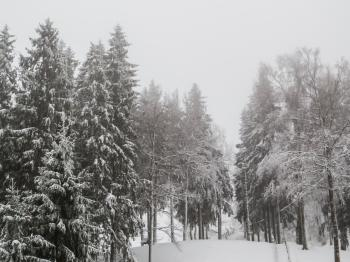 A beautiful winter in woods