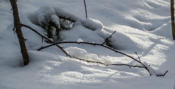 A branch in sun light
