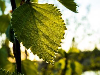 A bush leaf