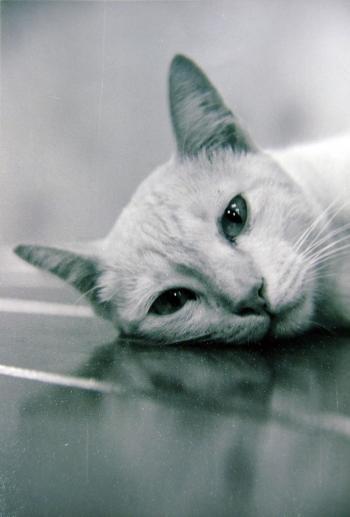 A Cat (B&W)