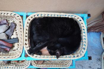 A cat in a basket