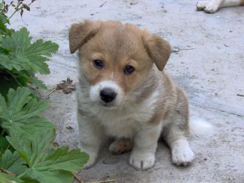 A cute little dog
