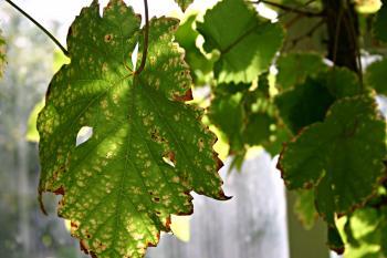 A dying leaf