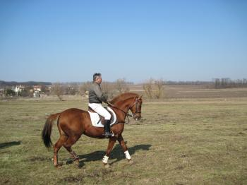 A horse and a jockey