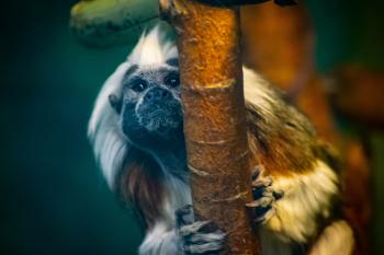 A monkey climbs a tree in the forest