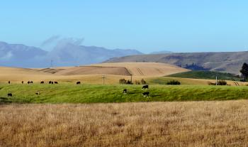 A rural setting. Fairlie. NZ