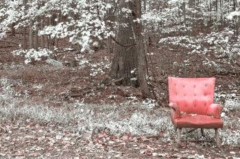 Abandoned Forest Comfort - Pink Winter Punch HDR