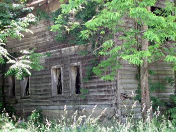 Abandoned wooden shack
