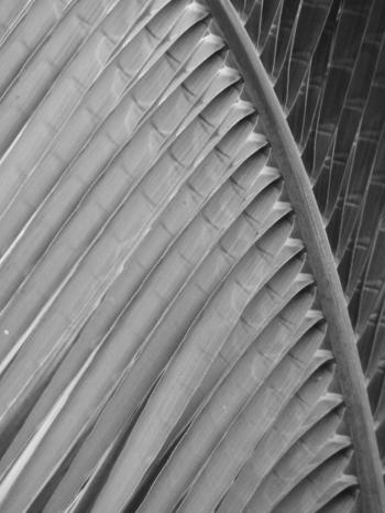 Abstract Palm Leaf Black and White
