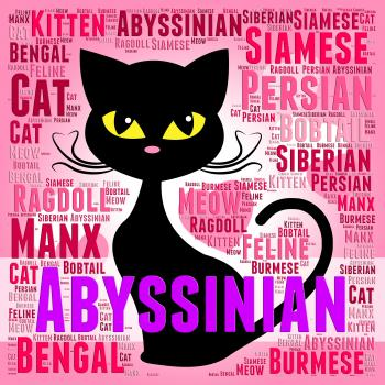 Abyssinian Cat Represents Shorthaired Kitty And Tabby