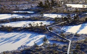 Aerial Photography of Frozen Lakes Surrounded by Trees