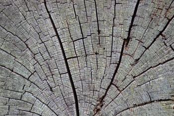 Aged cracked wood
