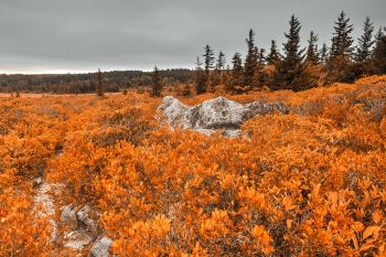 Amber Dolly Sods - HDR