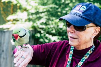 An elderly woman in a baseball cap plays with a colorful parrot in the reserve