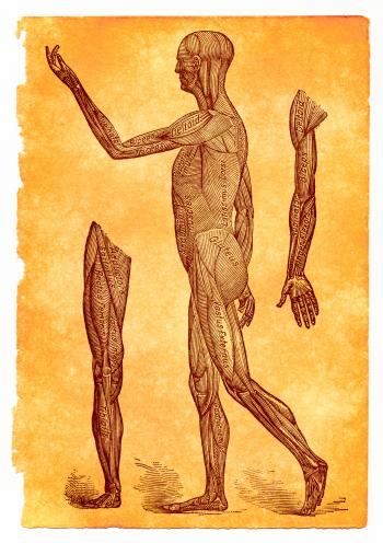 Antique Anatomy Illustration