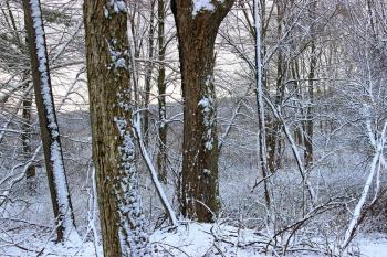 April Snow (3)