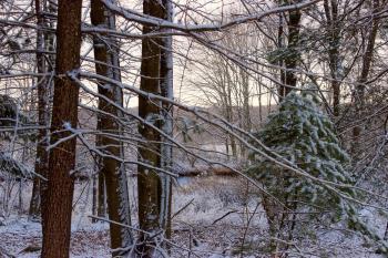 April Snow (4)