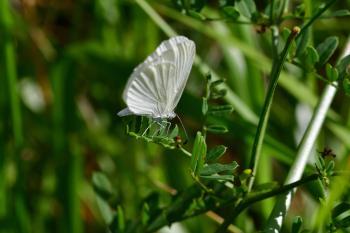 Araignées, insectes et fleurs de la forêt de Moulière (Ansozour - Bel Air)