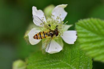 Araignées, insectes et fleurs de la forêt de Moulière (Autour du Gâchet de Villiers - Le Pas Peloton)