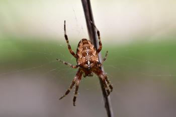 Araignées, insectes et fleurs de la forêt de Moulière (Autour du Gâchet de Villiers)