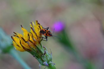 Araignées, insectes et fleurs de la forêt de Moulière (Croix Généraux - Saint Rom)