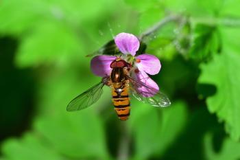 Araignées, insectes et fleurs de la forêt de Moulière (Le Gâchet de Villiers - La Vallée des Trembles)