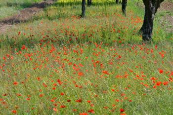 Araignées, insectes et fleurs de la forêt de Moulière (Le Gâchet de Villiers - Logerie)