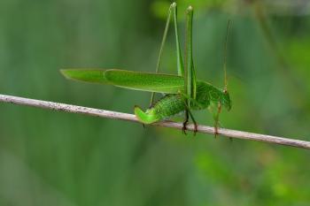 Araignées, insectes et fleurs de la forêt de Moulière (Le Pinail - Ansozour - La Gassotte)
