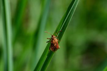 Araignées, insectes et fleurs de la forêt de Moulière (Le Plan des Aises - Du rond-point à Mauvais-vent)