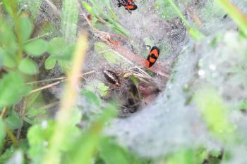 Araignées, insectes et fleurs de la forêt de Moulière (Le Plan des Aises - La Fosse au Loup)
