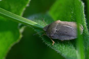 Araignées, insectes et fleurs de la forêt de Moulière (Le Plan des Aises - La Maison Brault)