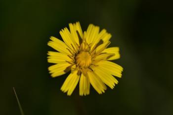 Araignées, insectes et fleurs de la forêt de Moulière (Le Plan des Aises)