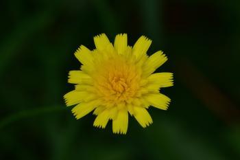 Araignées, insectes et fleurs de la forêt de Moulière (Les Agobis)