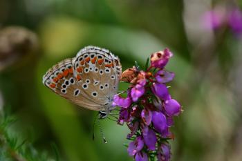 Araignées, insectes et fleurs de la forêt de Moulière (Les Chirons Noirs - Croix Généraux)
