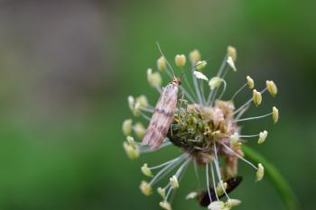 Araignées, insectes et fleurs de la forêt de Moulière (Les Chirons Noirs - Saint Rom)