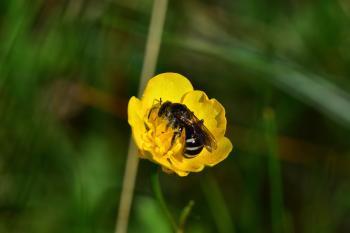 Araignées, insectes et fleurs de la forêt de Moulière (Les Chirons Noirs - St Rom)