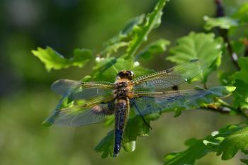 Araignées, insectes et fleurs de la forêt de Moulière (Les Chirons Noirs)