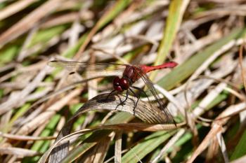 Araignées, insectes et fleurs de la forêt de Moulière (Les Closures - La Fontaine Salée - La Grosse Boussée)